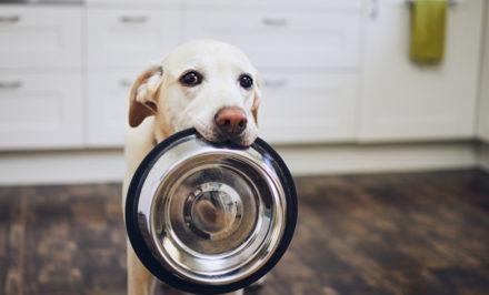 nourriture idéale chien