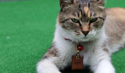 collier pour chat