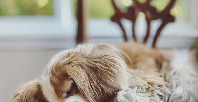 gérer stress animal