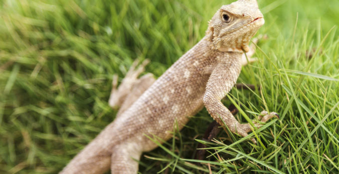 espèces de reptiles