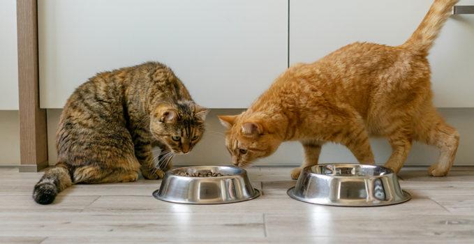 alimentation pour les chats