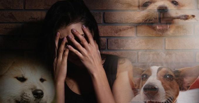 peur des chiens