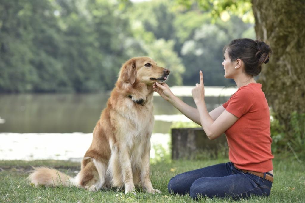 apprentissage du chien