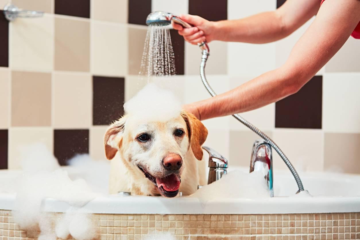 Chien prenant un bain