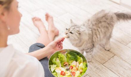 nourrir chat