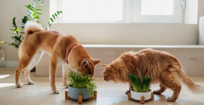 plantes et les chiens